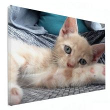 kitten op canvas